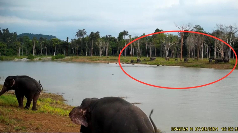 A_Royal_Elixir_to_Strengthen_Wild_Elephants_2